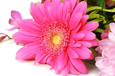 Free Pink Flower. Stock Images - 19252784
