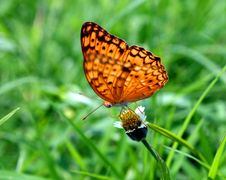 Free Dotted Butterfly Royalty Free Stock Images - 19253459