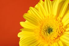 Free Background With Beautiful Yellow Gerber Flower Stock Image - 19253581