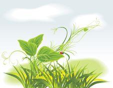 Free Sprig And Ladybird Among Grass Stock Photos - 19255283