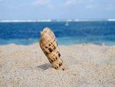 Free Sea Shell Royalty Free Stock Photography - 19258547