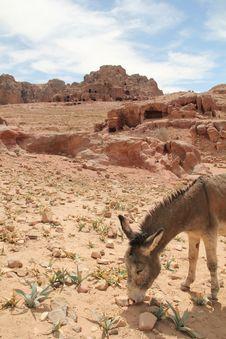 Free Petra Stock Images - 19259404