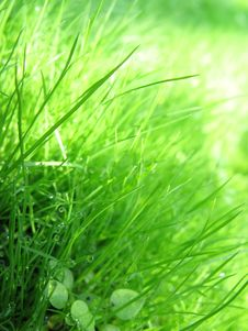 Free Grass & Dew Stock Photos - 19262153