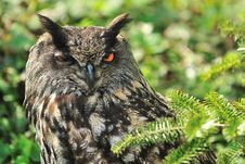 Free Owl Stock Image - 19262671