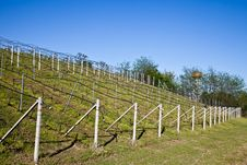 Free Vineyard Irrigation System Royalty Free Stock Images - 19263789