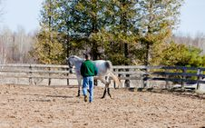Free Training A Horse To Long Line Royalty Free Stock Photography - 19264407