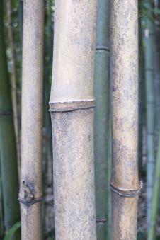 Free Bamboo Stock Photo - 19264920