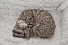Free Tabby Cuddling Stock Photos - 19266033