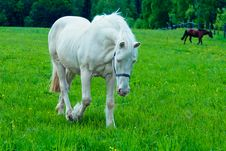 A Horse In The Field Stock Photo