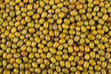 Free Mung Bean Background Stock Images - 19267714