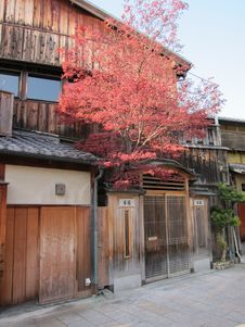 Free Traditional Japanese Shop House With Maple Tree Royalty Free Stock Photography - 19269937