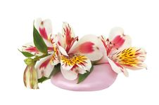 Free Soap And Orchid Royalty Free Stock Image - 19270206