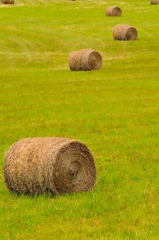 Free Harvested Dried Straw Royalty Free Stock Photo - 19270215