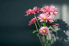 Free Bunch Of Flowers Stock Image - 19273101
