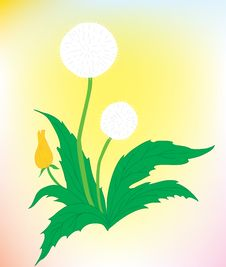 Free A Beautiful Dandelion On A Color Background Royalty Free Stock Photo - 19275015