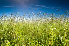 Free Green Grass Under Blue Bright Sky Royalty Free Stock Image - 19276726