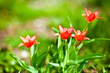 Free Spring Flowers Royalty Free Stock Image - 19276806