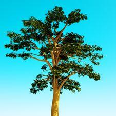 Free Sunny Tree Stock Images - 19278084