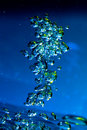 Free Blue-green Bubble Royalty Free Stock Images - 19280669