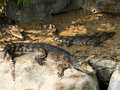 Free Crocodile Stock Images - 19281124