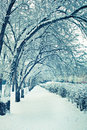 Free Winter Trees In Snow Royalty Free Stock Photos - 19288138