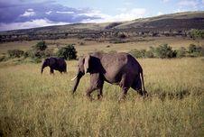 Free Adult Bull Elephant Stock Images - 19280344