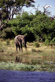 Free Adult Bull Elephant Stock Photography - 19280382