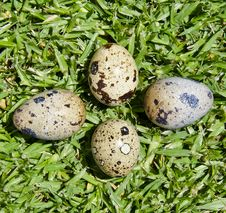 Free Eggs Of Quail On The Green Grass Stock Image - 19281101