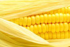 Free Corn Close-up. Royalty Free Stock Photo - 19285955