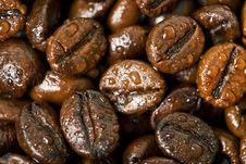 Free Coffee Beans, Water Drops Stock Image - 19287201