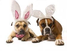 Free Boxer Bunnies Royalty Free Stock Image - 19288376