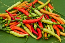 Free Red Hot Chilis Stock Photo - 19288440