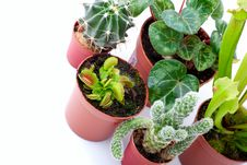 Potted Plants Stock Images
