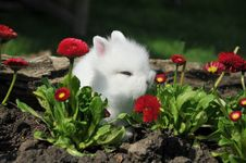 Free Rabbit Royalty Free Stock Photography - 19289017