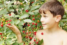 Free Boy Holds Cherries Stock Photography - 19289812