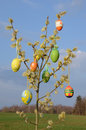 Free Easter Eggs On Spring Willow Tree Royalty Free Stock Photography - 19294947