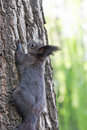 Free Squirrel Climbing The Tree Royalty Free Stock Photos - 19296918
