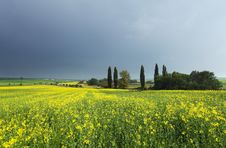 Spring Meadow With Yellow Flowers Stock Image