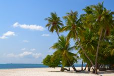 Free Tropical Beach Royalty Free Stock Images - 19291099