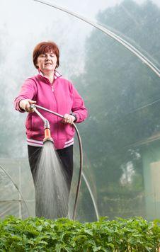 Free Woman Watering  Seedling Royalty Free Stock Photo - 19294295