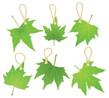 Free Leaves As Labels Stock Images - 19295284
