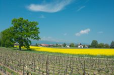 Free Swiss Vineyard Summer Landscape Royalty Free Stock Photo - 19295345