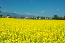 Free Swiss Summer Rural Landscape Royalty Free Stock Photography - 19295377