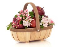 Free Apple Flower Blossom Stock Photography - 19296742