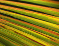 Free Abstract Palm Leaf Background Royalty Free Stock Images - 1930129