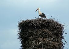 Free Stork On The Nest Royalty Free Stock Images - 1931869