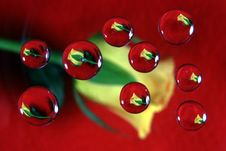 Free Yellow Rose In Drops 2 Royalty Free Stock Photos - 1933228