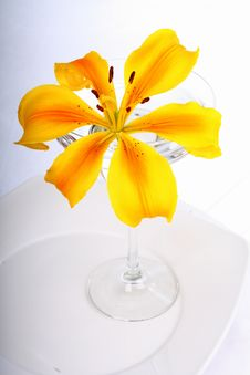 Free Yellow Lily In Glass Stock Photo - 1933410