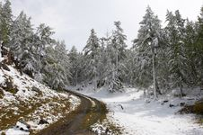 Free White Wood, Road And Snow. Royalty Free Stock Images - 1933899