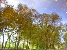 Trees Reflected In A Water Royalty Free Stock Photos